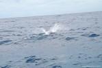 vacanze barca vela noleggio Caraibi