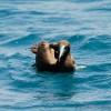 catamarani noleggio Antille