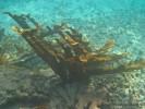 catamarani noleggio caraibi