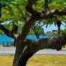 English Habour - vacanze barca vela noleggio Antille - © Galliano