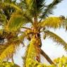 Cocoa Bay - vacanze in barca Caraibi - © Galliano