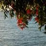 Baie de St-Luois - vacanze in barca a vela a noleggio - © Galliano