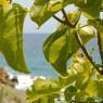 Petite Anse - vacanze in barca a vela Caraibi - © Galliano