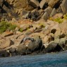 Rocher Crole - vacanze in barca a vela a noleggio - © Galliano