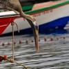vacanze in barca a vela a noleggio